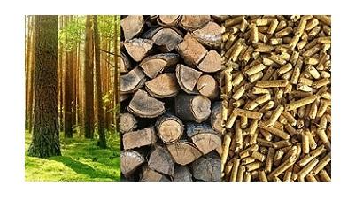 Co dalej z biomasą? Warsztaty II dnia Forum Biomasy